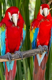 Bali Tours ideas: See birds of paradise at Bali Bird Park