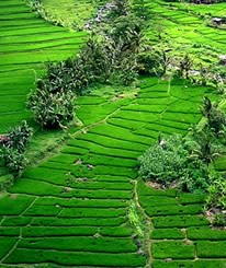 Bali Tours ideas: See magnificent Jatiluwih rice terraces