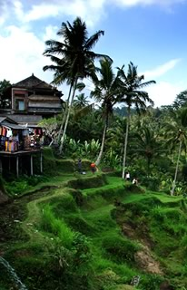 Bali Tours ideas: See rice terraces in Tegalalang
